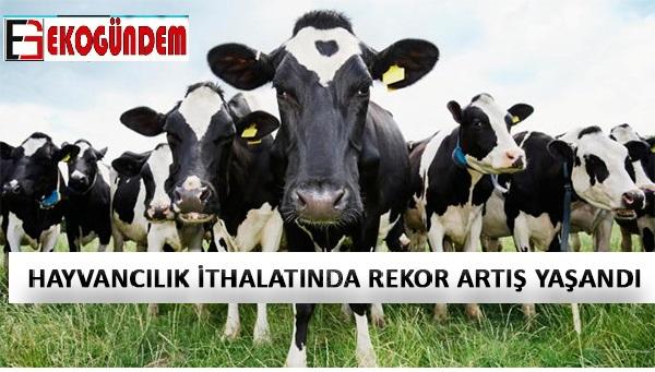 Türkiye hayvan ihracatında diplerken, ithalatta tavan yaptı