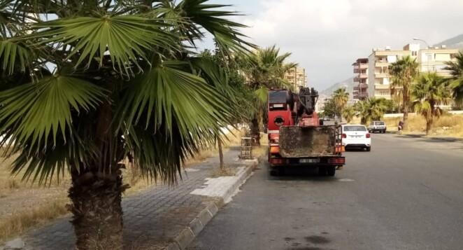 -İskenderun Belediyesi Park Bahçe Ekipleri  Ağaçlarda Sonbahar Budaması  Yapıyor